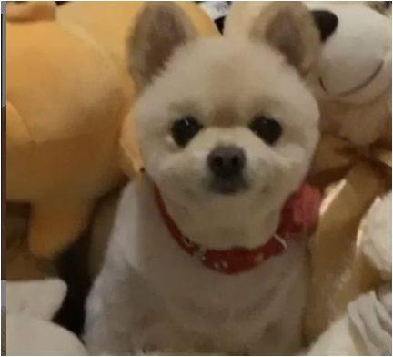新庄剛志の愛犬ラナの可愛い画像