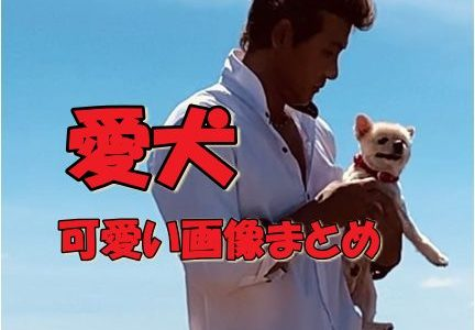 新庄剛志の愛犬ラナの可愛い画像まとめ!犬種はポメラニアン!